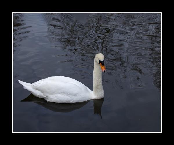 Swan Lake by r0nn1e