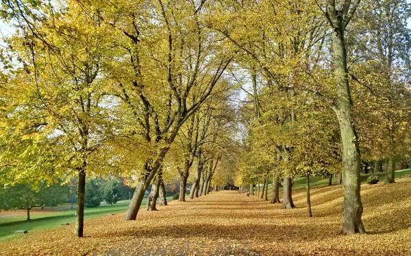 Lincoln arboretum by mitchellhatpeg