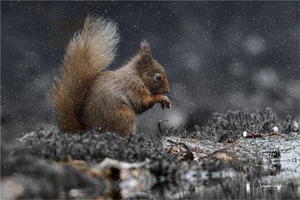 Sitting Squirrel by craggwildlifephotography