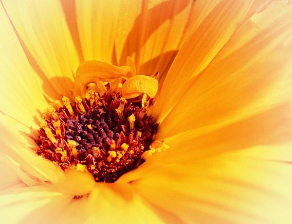 Bloom by lynam