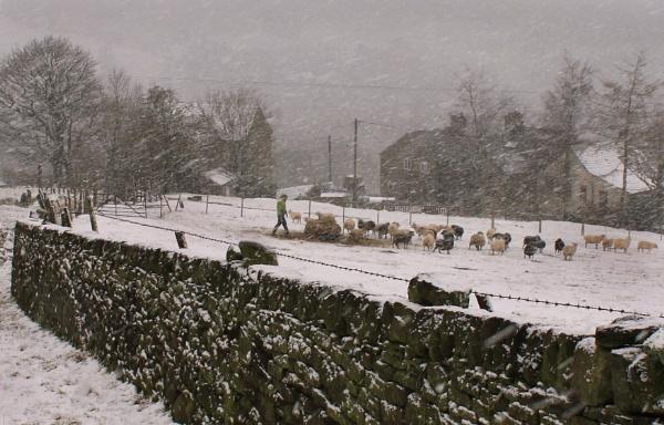 Snowstorm at Hawkyard Farm by michaelfox
