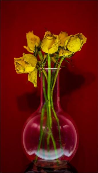 five paper roses... by estonian
