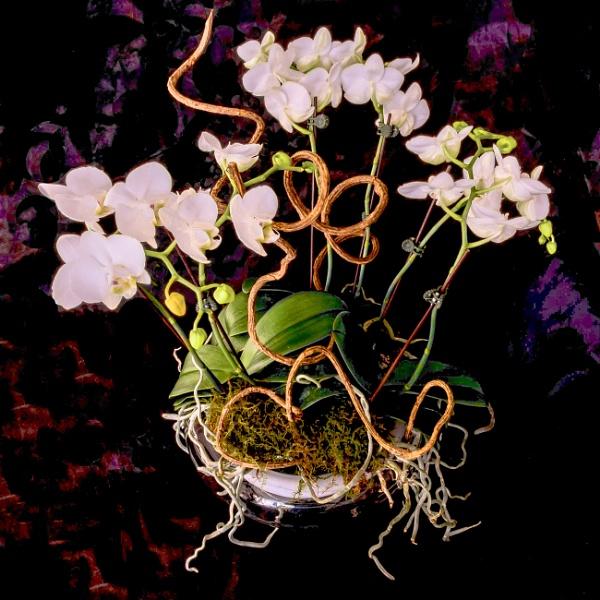 Miniature Orchids on Velvet by BobbyMS
