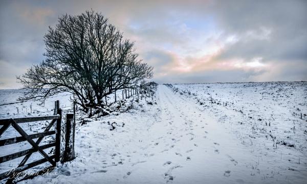 Snow Moor by Pygar