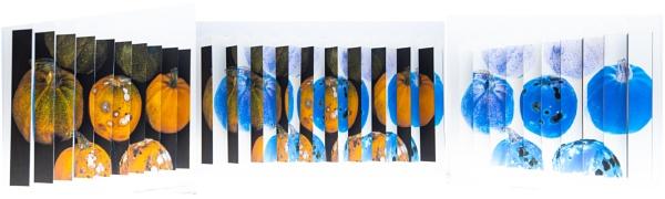 Sliced  (a lenticular print) by Acancarter