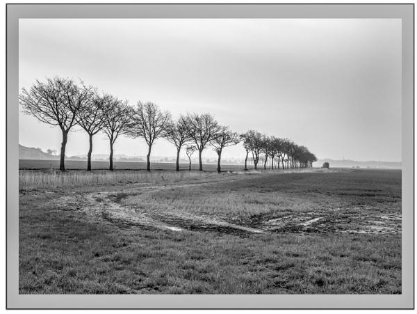 trees by jimlad