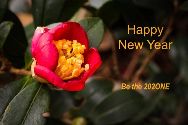 New bud opens, New Year by JackAllTog