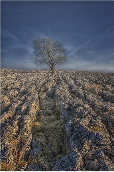 Lone Tree by stevenb