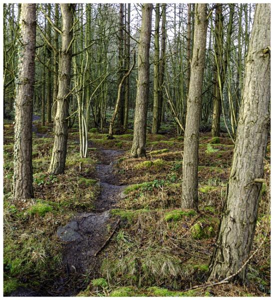 Woodland Walk by nstewart