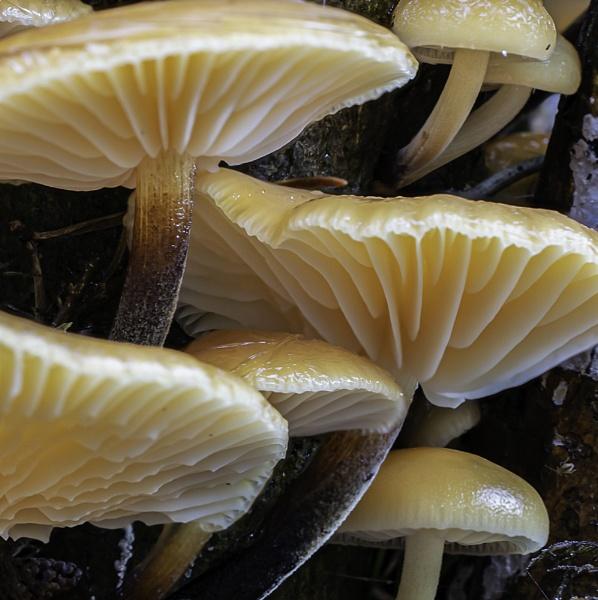 Fungi by Dallachy
