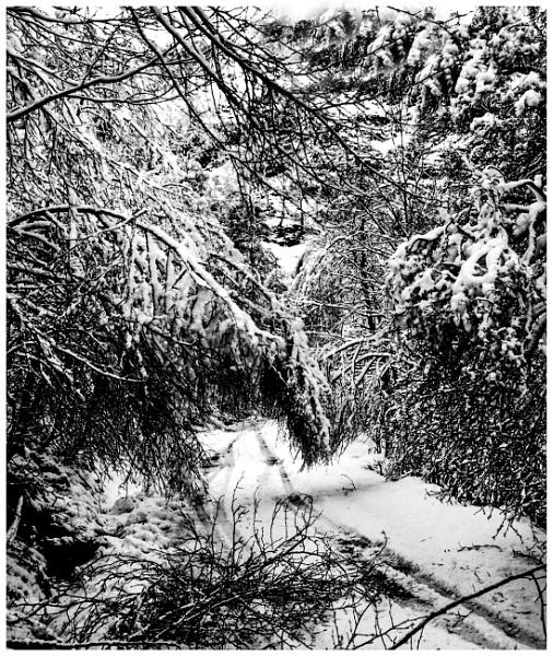 Winter Road by mac