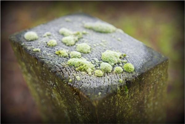 Frosty moss on a post by notsuigeneris