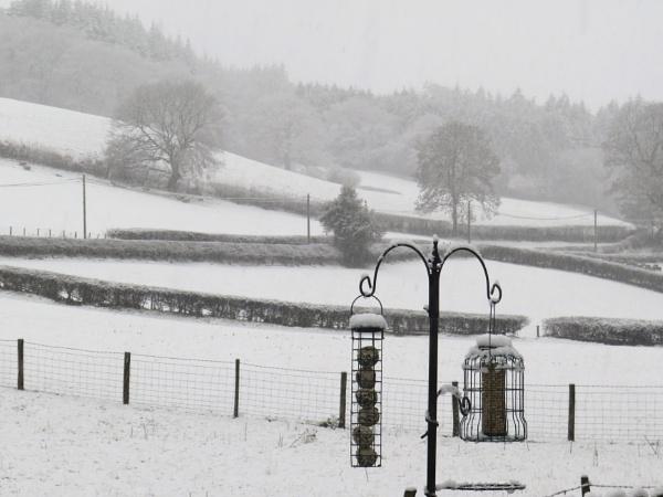 Snow by ddolfelin