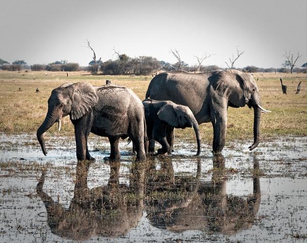 Elephant reflections by pdunstan_Greymoon