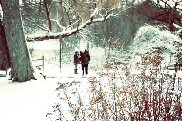 Snow white scene by manicam