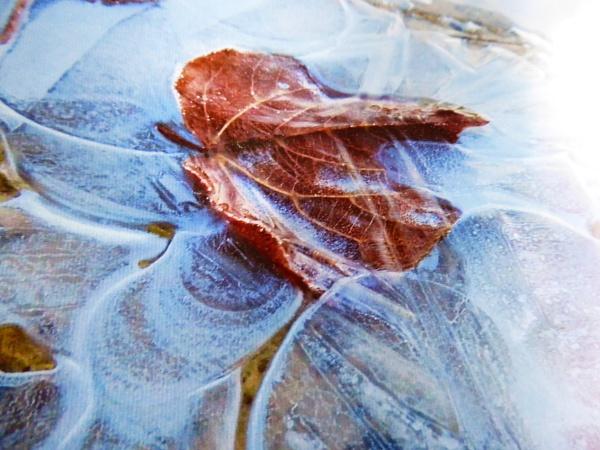 frozen puddle by jenny007