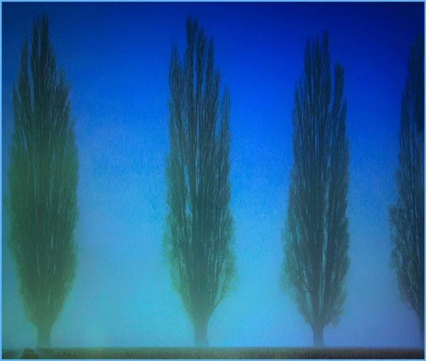 three and a half trees by estonian