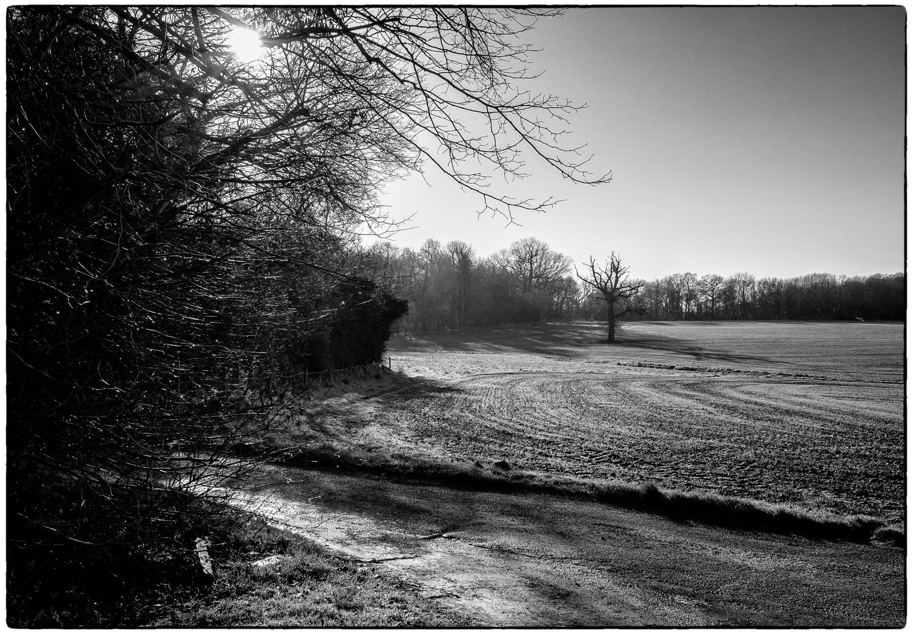 More Fields Near Felix Hall