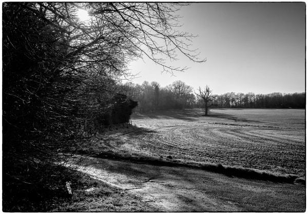 More Fields Near Felix Hall by NevJB