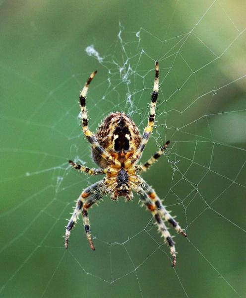 Web Repair. by zerolimits