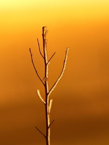 sunset, ice, twig by alfpics