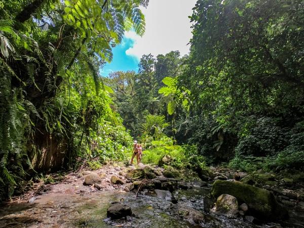 Rainforest Martinique by Owdman