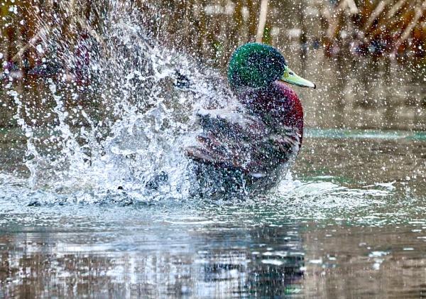 Making A Splash by JJGEE