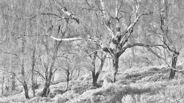 Hoar Frost by fredsphotos