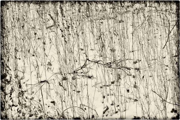 winter weeds by leo_nid