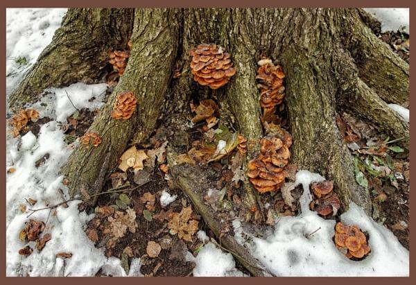 winter fungi by leo_nid