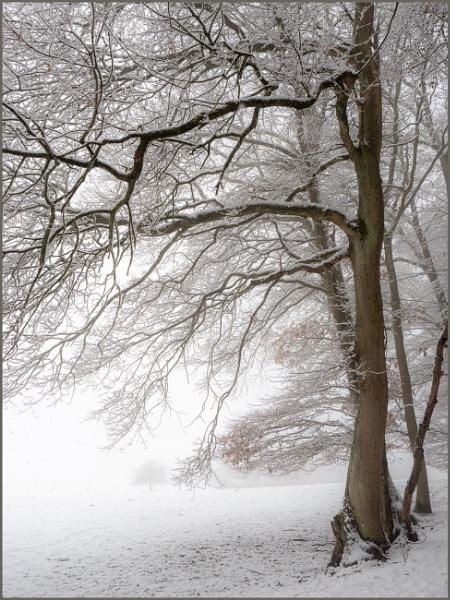 Wintertime by kw