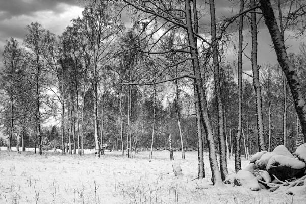 Cold by Leikon
