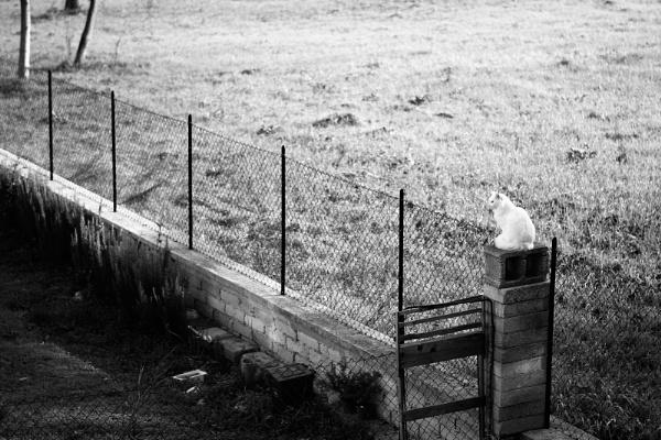 Chat blanc en noir et blanc by MediumSizeUnavailable