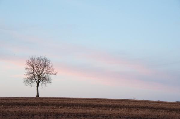 Lone Tree by Bajob3