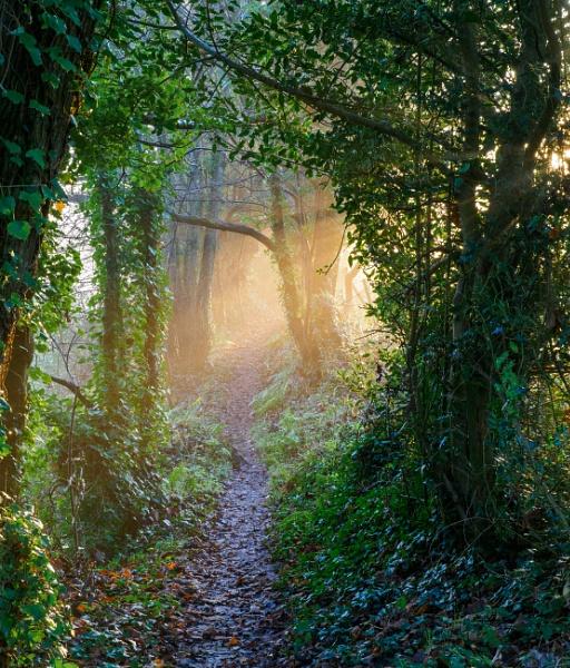 Mystic Path by JohnDyer
