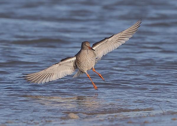 Redshank Landing by NeilSchofield