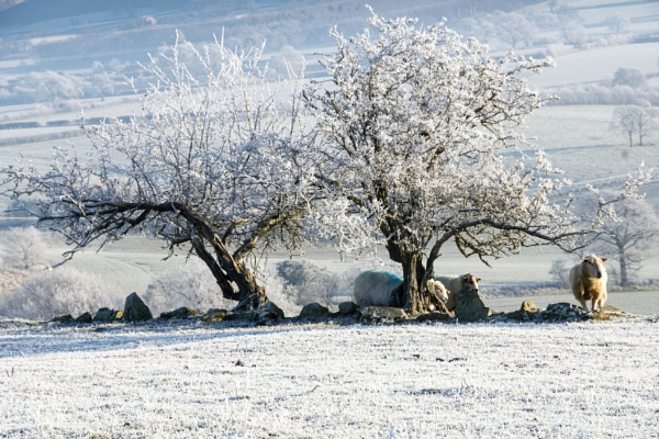 Frozen Land by LinH