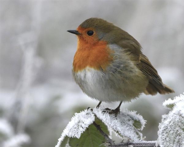 A Cold winters day by jonnydart