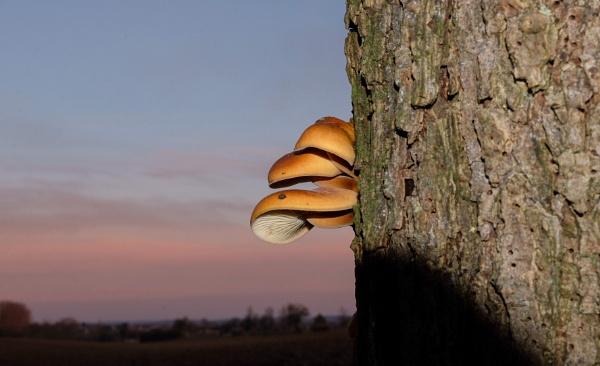 Mushroom family by 64Peteschoice