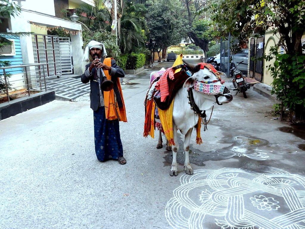 """ Sankranthi-Festive-Greetings """