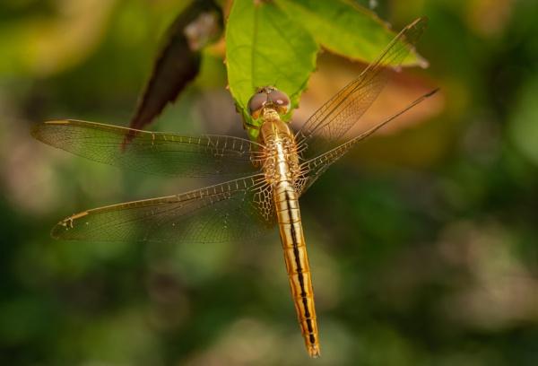 Female Ditch Jewel by jasonrwl