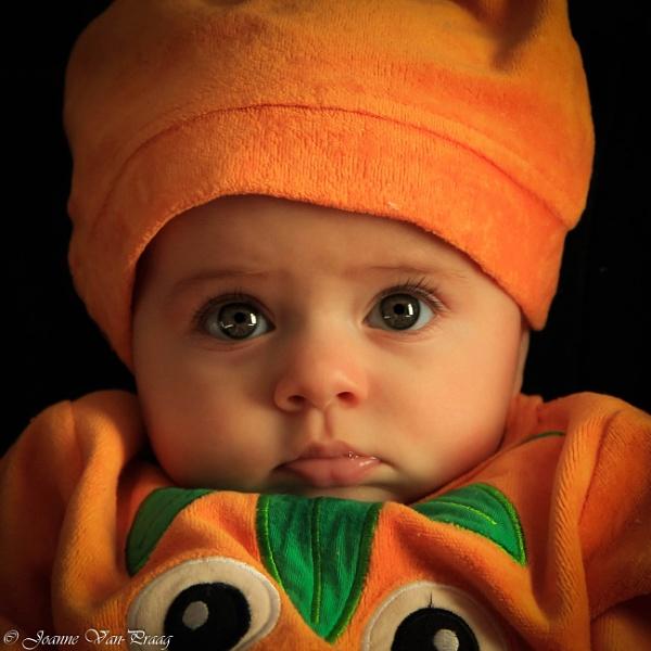 Little Pumpkin by mammarazzi