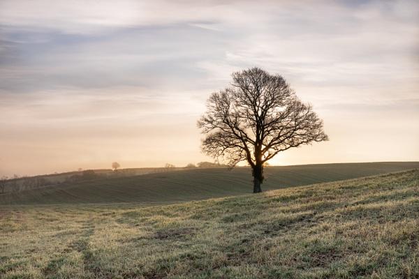 Alone by Arvorphoto