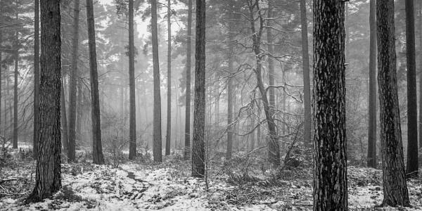 Amongst the mist by soulsharer