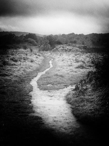 Path on a gloomy day by notsuigeneris