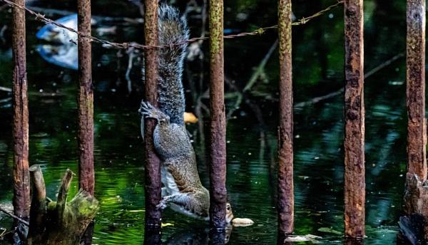 Desperate Squirrel. by louie1st