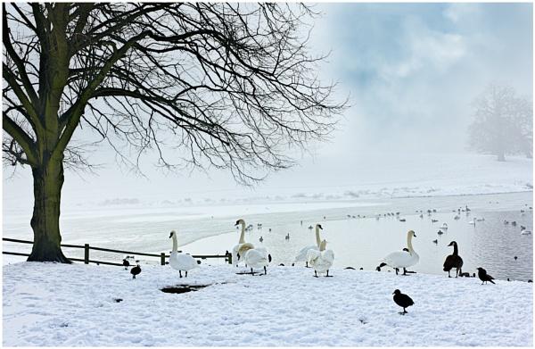 Bleak Mid Winter by capto