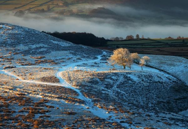 Frosty Trees by Trevhas