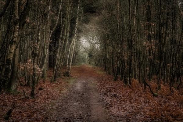 path by rocky41