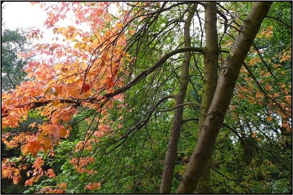 fall foliage by FabioKeiner